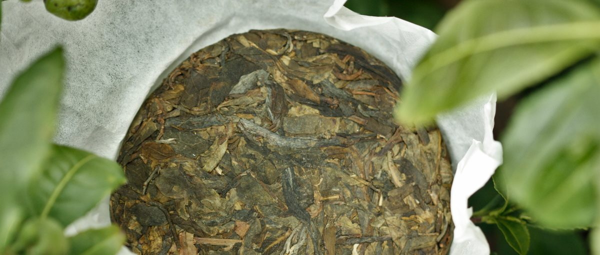 普洱 – 大叶茶 Puer – Big leaf tea